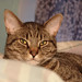 camera test cat portrait #45999