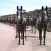 Borax 20 Mule Team