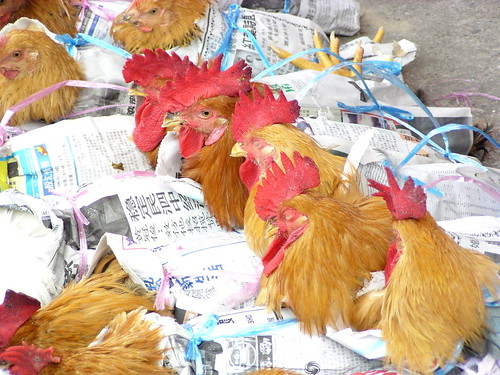 Chickens for sale | by The Pitcher