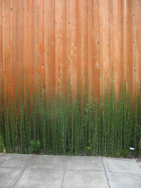 Plant like a bamboo essay writer