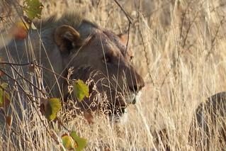 Parque Nacional Pilanesberg, Africa do Sul