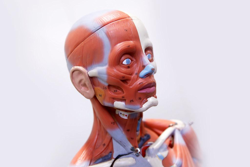 menschliche Muskeln | Tim Reckmann | Flickr