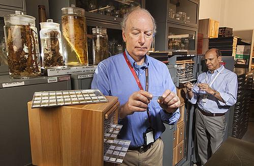 The USDA Nematode Collection