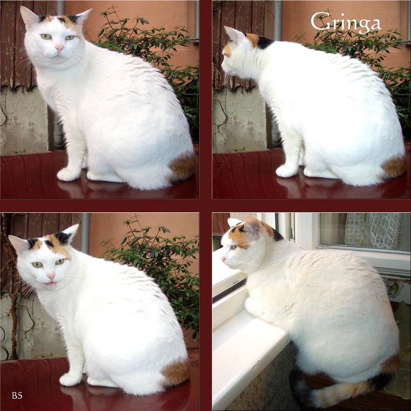 Katze Katzenbekanntschaft: Gringa aus Lindau am Bodensee ... 2006 ... Foto(s): Brigitte Stolle, Mannheim