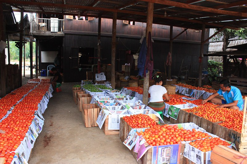 Инле перебирает овощи