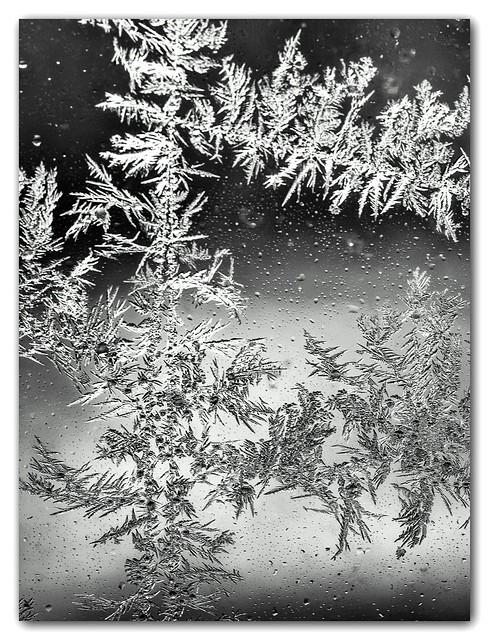 L'hiver  32257037892_14befbe025_z