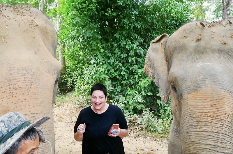 Elephants In Kanchanaburi