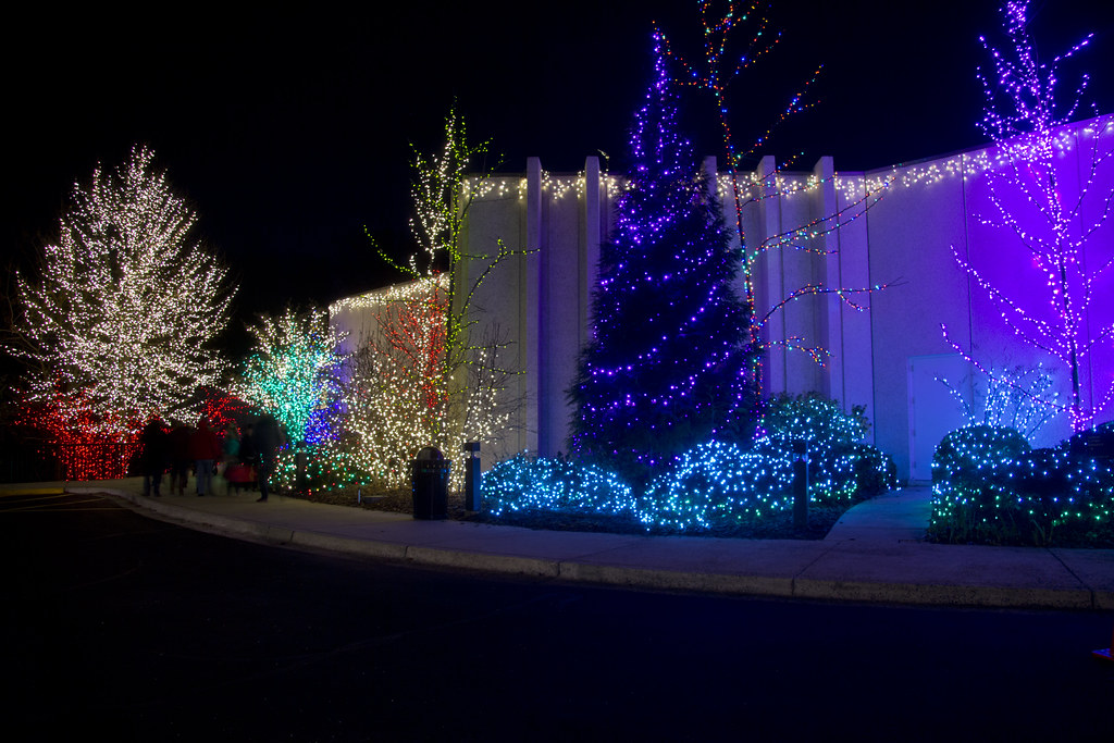 Best 28 National Loon Christmas Lights S