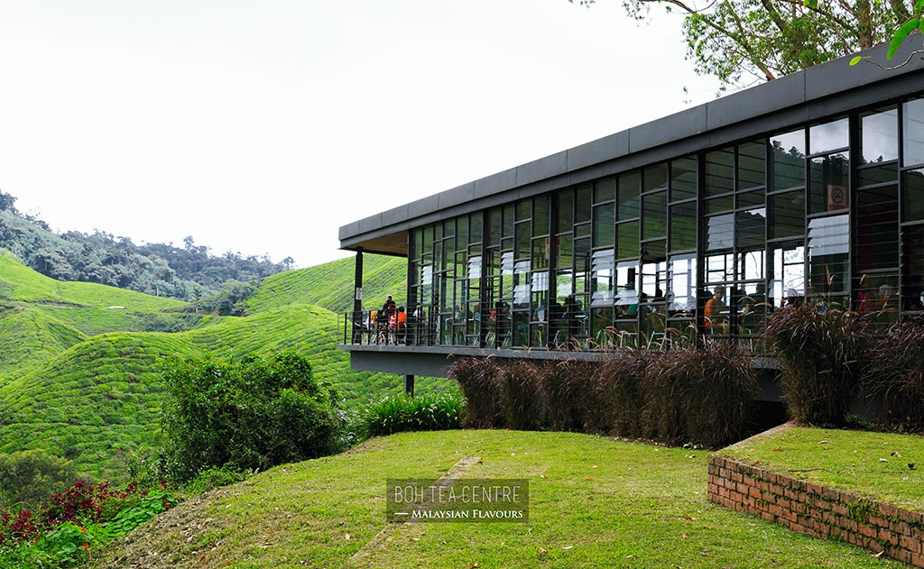 boh tea centre sungai palas cameron highlands malaysian
