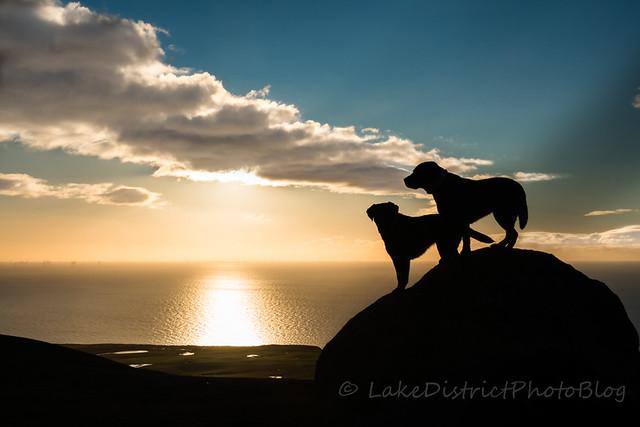 英国 イギリス 湖水地方 雄大 風景 自然 シルエット 海 夕日 犬