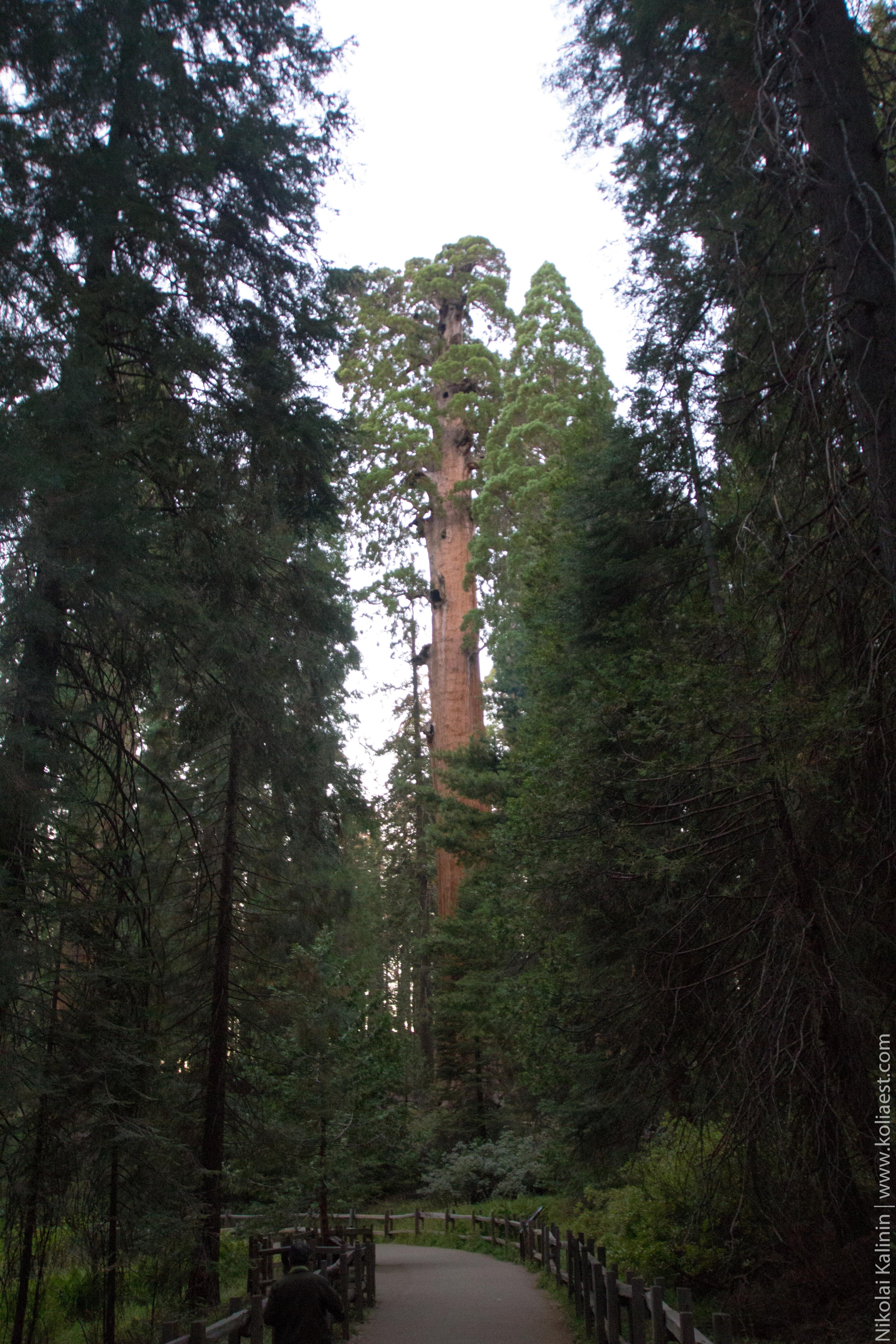 Sequoia-96