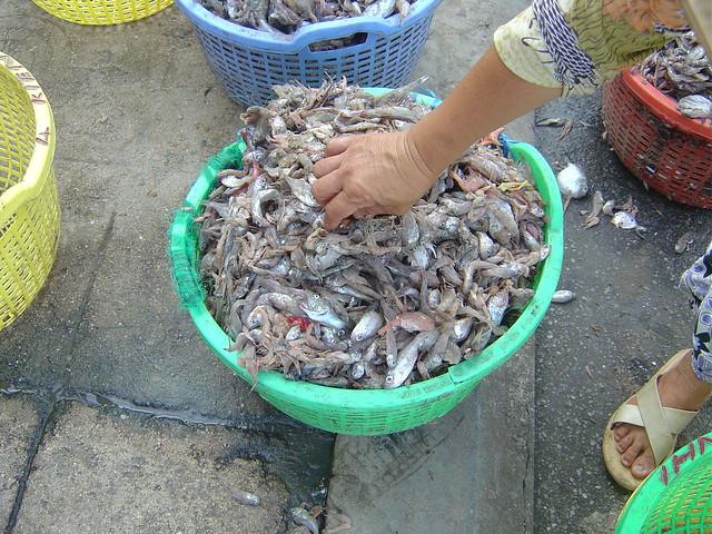 WWF Greater Mekong