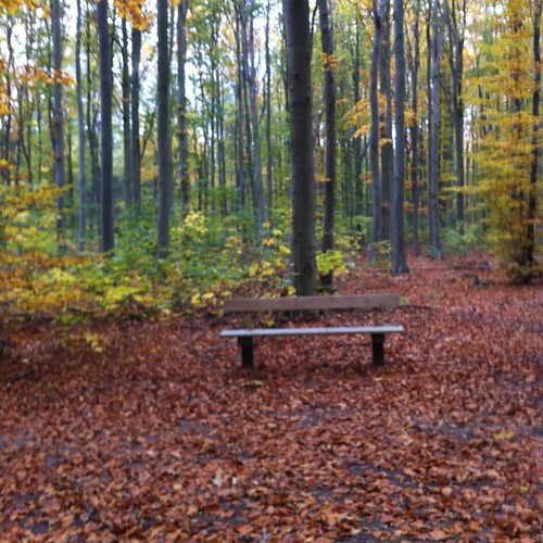 Brøndbyskov's Heidegger bench in autumn