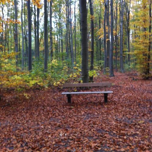 Brøndbyskov's Heidegger bench in autumn