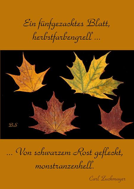 Herbst Baum Blatt Herbstfarben Herbstfärbung Herbstverfärbung Baumquiz Was ist das für ein Baum Carl Zuckmayer Gedicht Baumgedicht Ahorn Foto Brigitte Stolle 2015