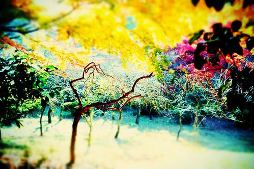 彩りの世界