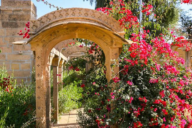 Garden with bougainvillaea flowers in Amar Sagar Jain temple, Jaisalmer, India ジャイサルメール アマルサガルのジャイナ教寺院のブーゲンビリア咲く庭園