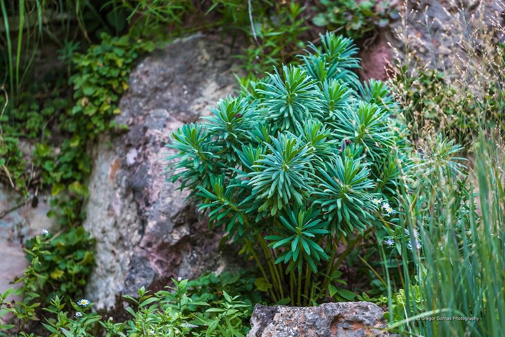 Botanischer Garten Gardone Riviera Italien Gregor Gornas