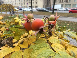 Снимок с Apple iPhone 6s