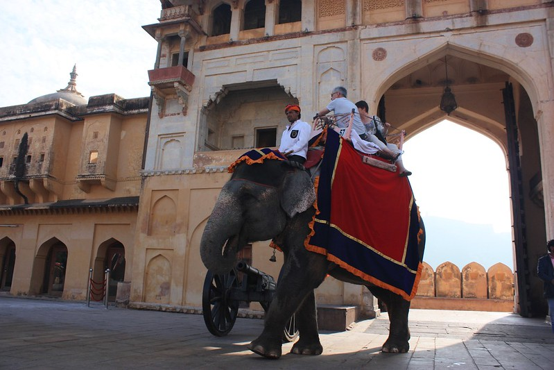 Индия, Амбер,слоны