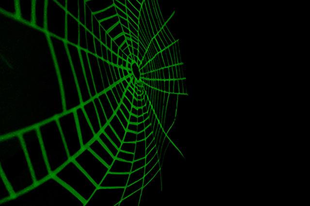 Angela Chenの個展「The spider net」を開催します