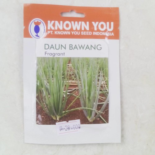#bawang Daun Fragrant #seed #hidroponik