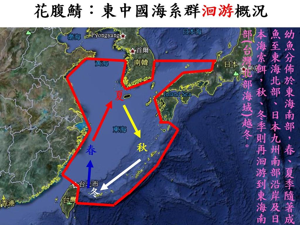 花腹鯖於東中國海系群迴游概況。圖片來源:廖大瑋