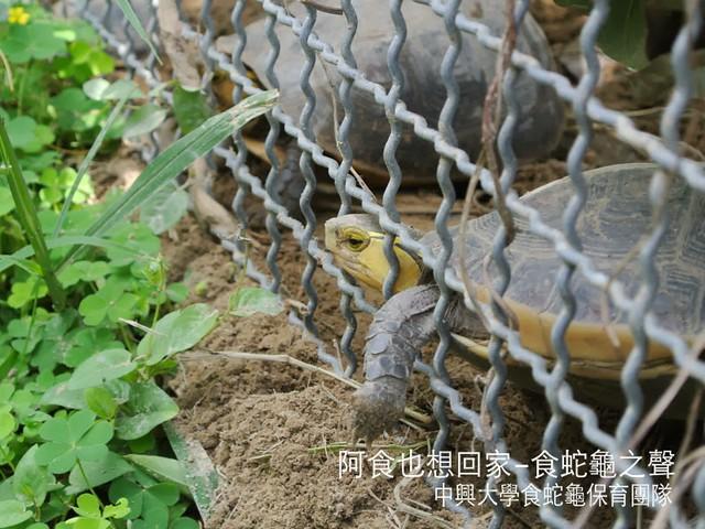 中興大學食蛇龜保育團隊發起單車環島,替食蛇龜保育請命