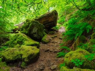 Oregon Forest Green Oregon