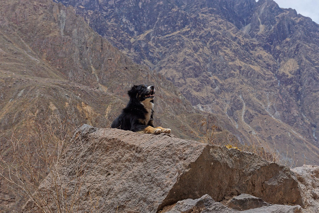 Rodrigo, our companion during hike in the Colca canyon