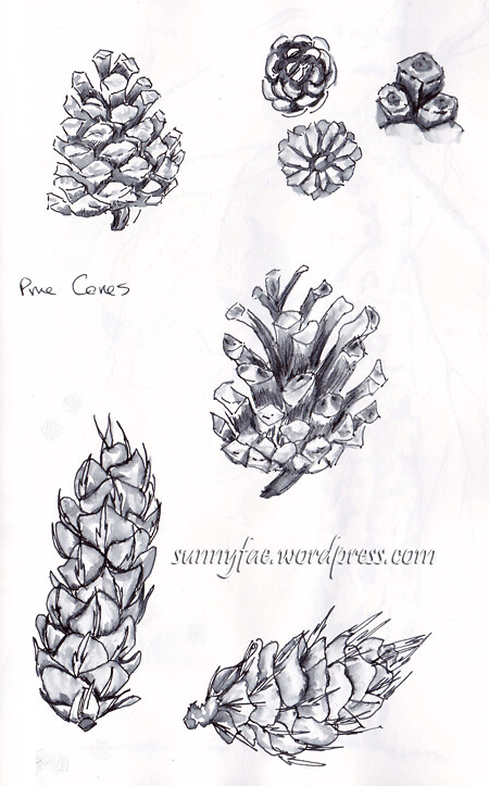 pine cone sketches