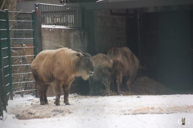 Tierpark Friedrichsfelde 08.01.201755