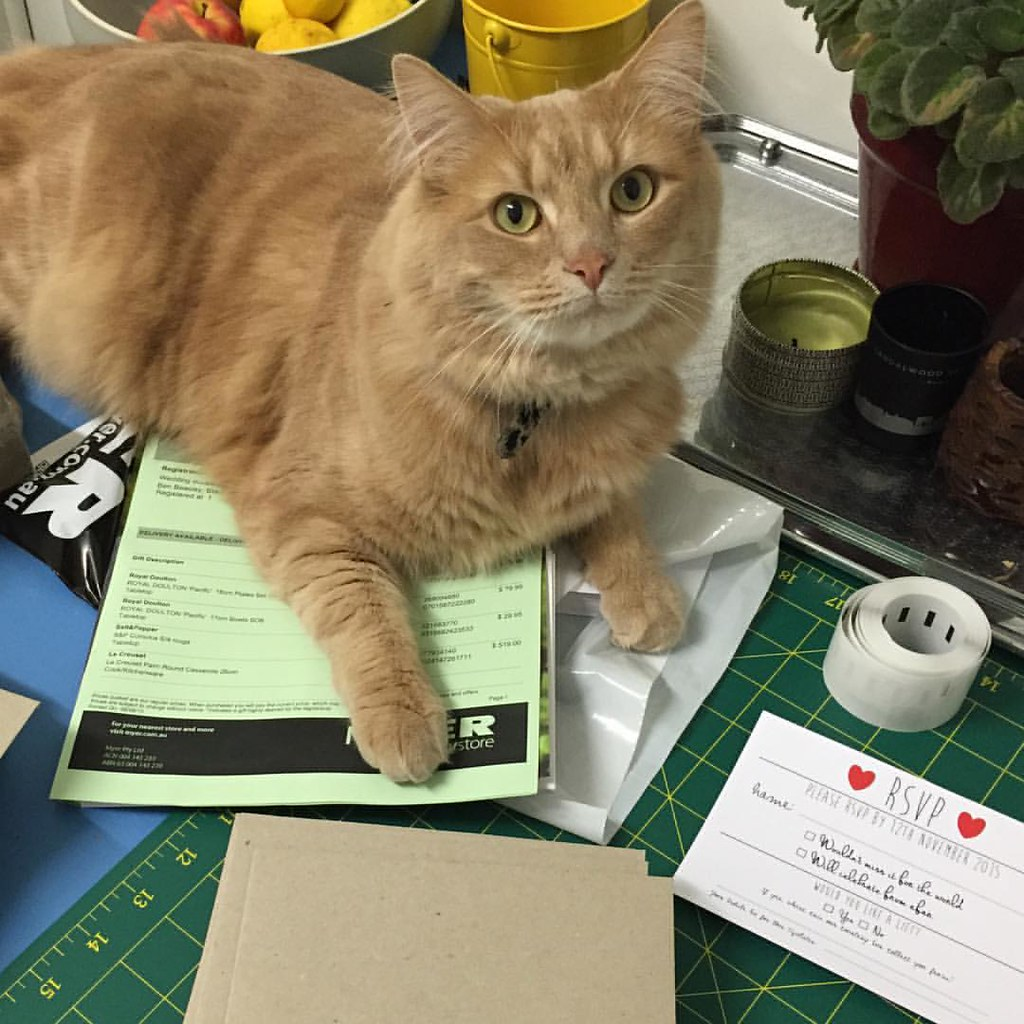sampson the cat, lounging on and around everything i was using to put together my wedding invites on our kitchen table
