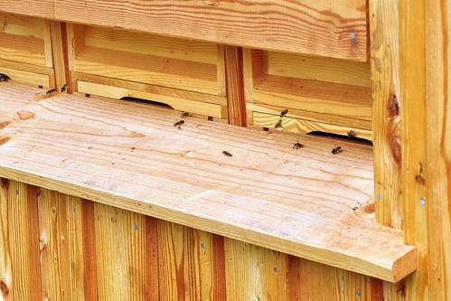 Bienen Bienenhaus Bienenbeflug Erträge mit und ohne Bienenbeflug bei ausgewählten Kulturen Foto Brigitte Stolle Oktober 2015