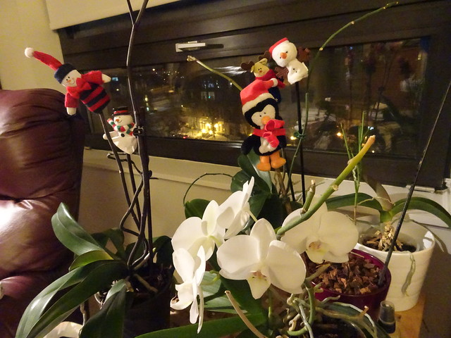 Orchids and Whimsy