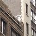Peeping Gib