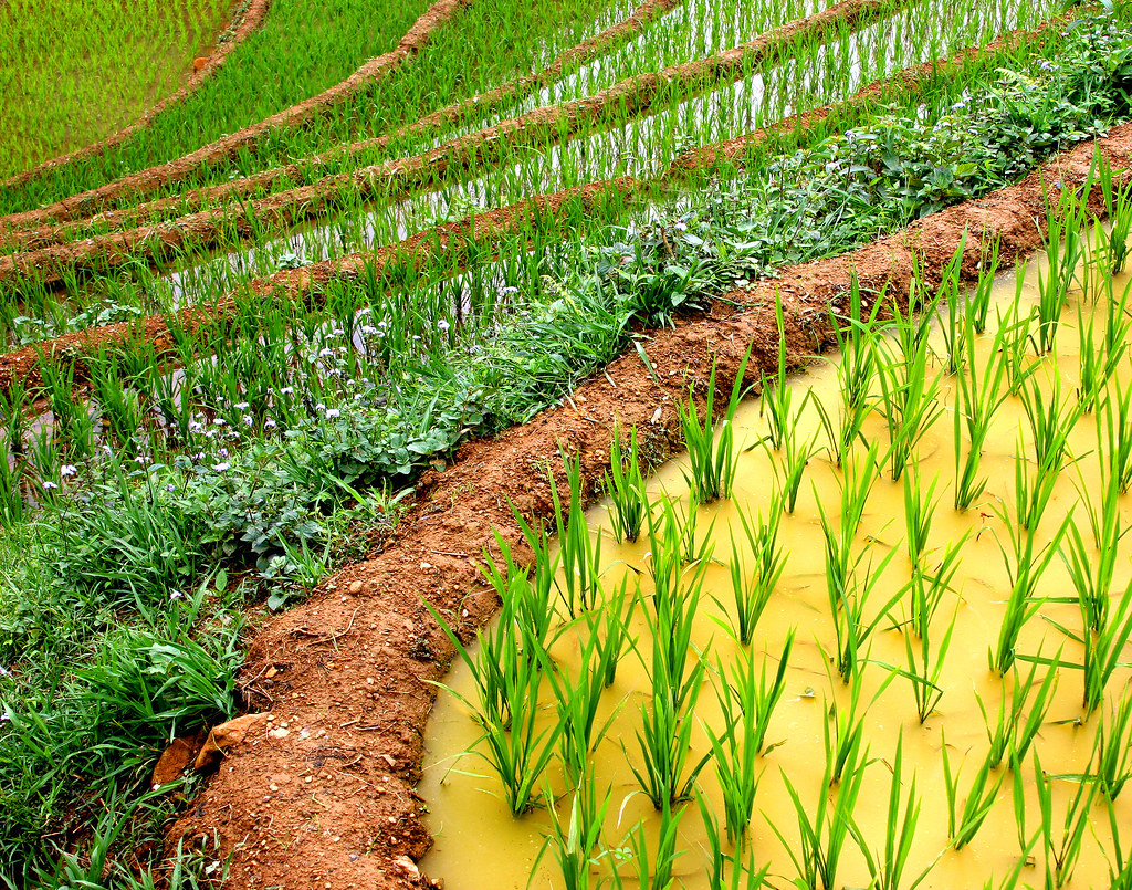 how to create a terraced field