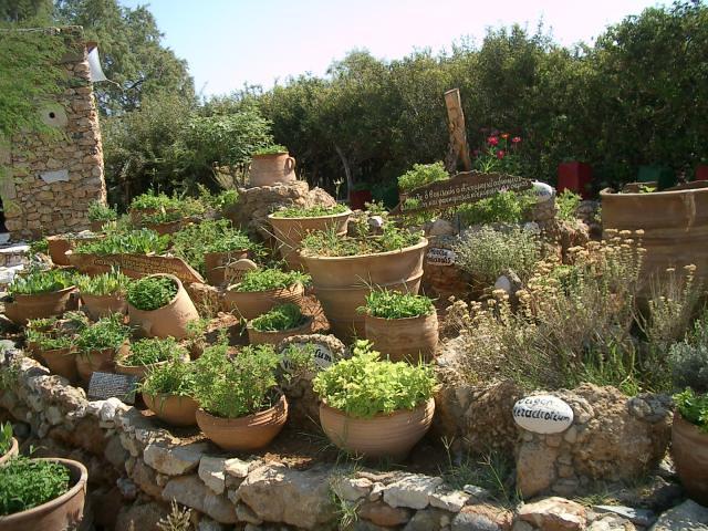 herbes aromatiques et m dicinales olivier duquesne flickr. Black Bedroom Furniture Sets. Home Design Ideas