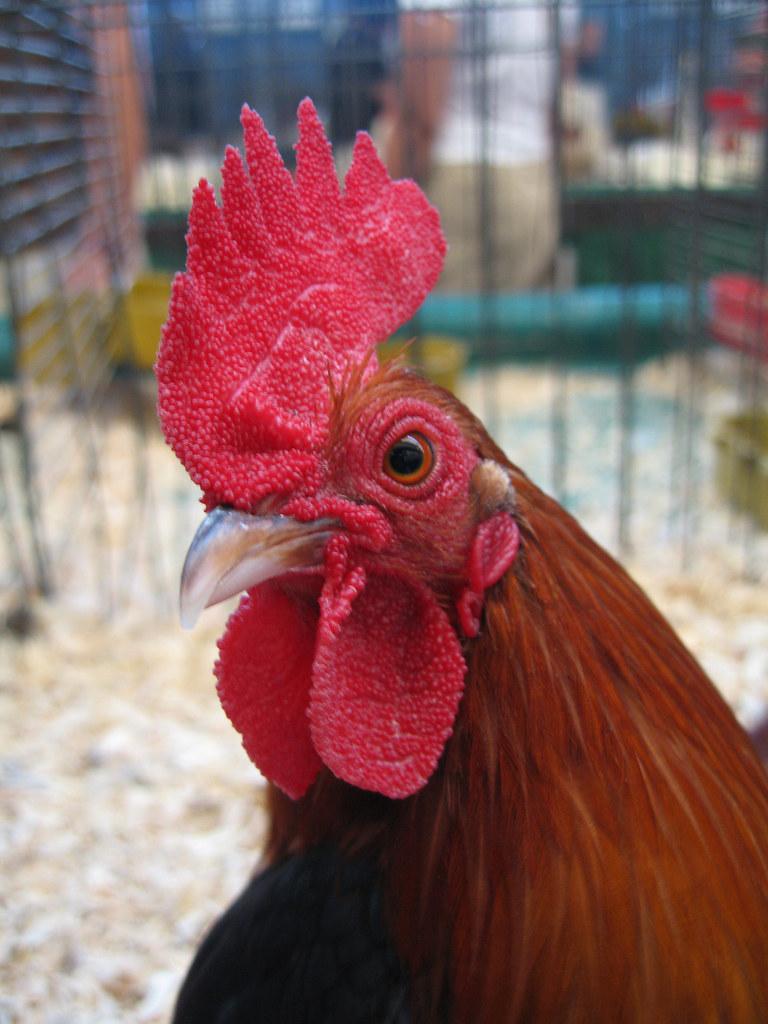 Freaks Of Cock Blog 24