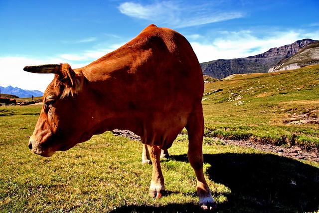 Agresive horny cow girl 4