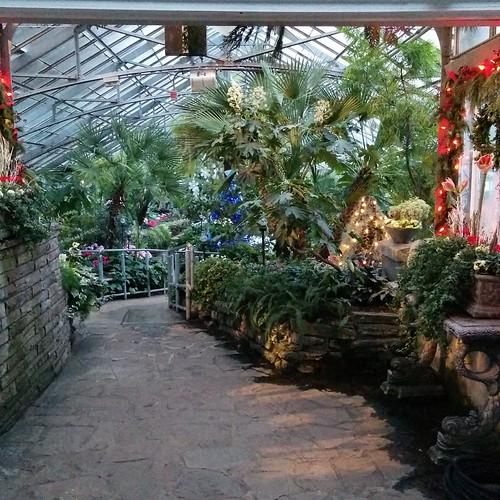 Allan Gardens, Toronto #toronto #allangardens #greenhouse #winter