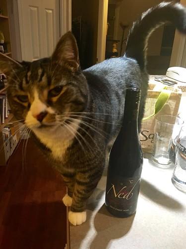 Watson and a wine bottle