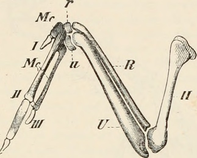 Image From Page 138 Of Elements Of The Comparative Anatom Flickr