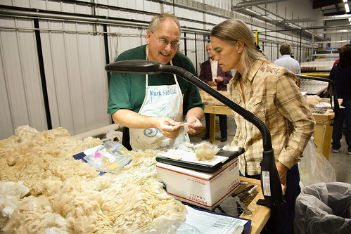 Mark Schalk explains the process for sorting Alpaca hair that will be used to make blanket yarn. Schalk is the owner of Two Branch Ranch, an Alpaca farm in Saline, Mich. He brought the fiber to Springfield, Ky., for sorting and cleaning.