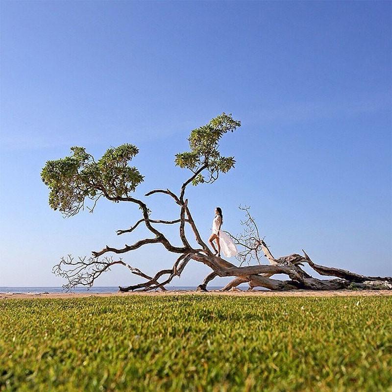 5.tree_by_navipon_1