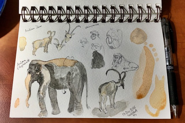 Zoo sketches December 2016