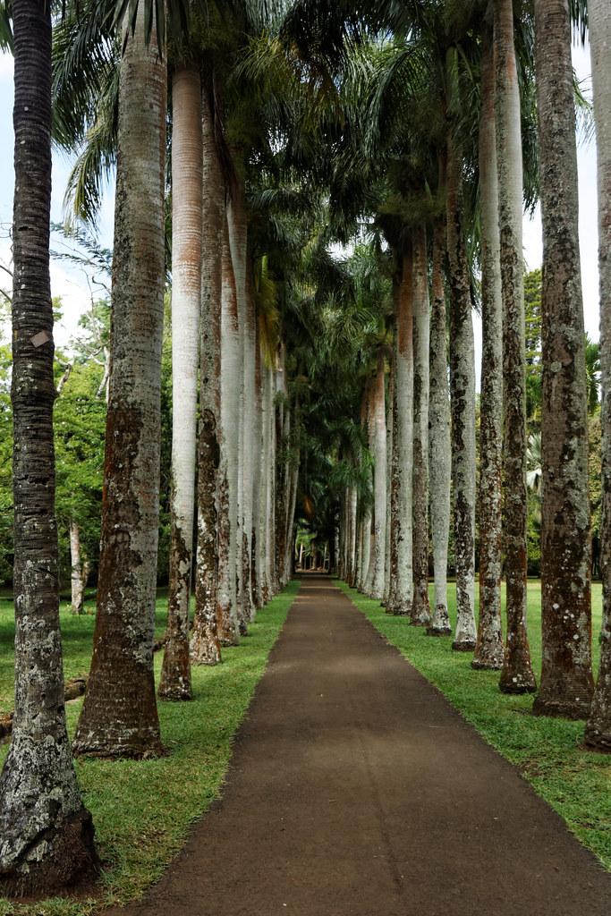 Jardin botanique de pamplemousse ile maurice xavier for Jardin xavier