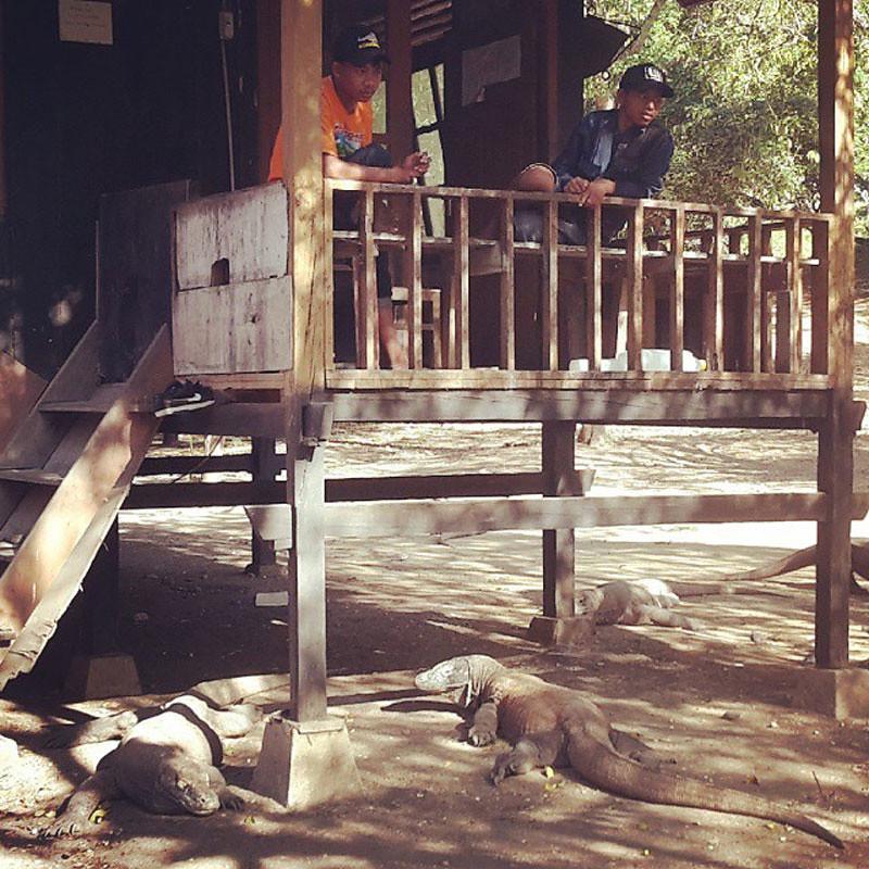 Komodo Island Local Housing