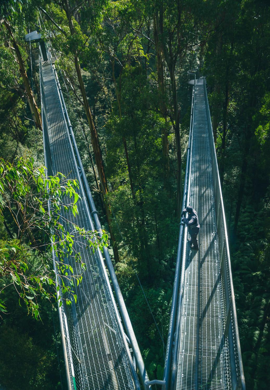 Skywalk, Otway Park, Australia