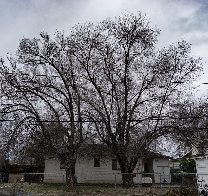 Gray Morning, House with trees